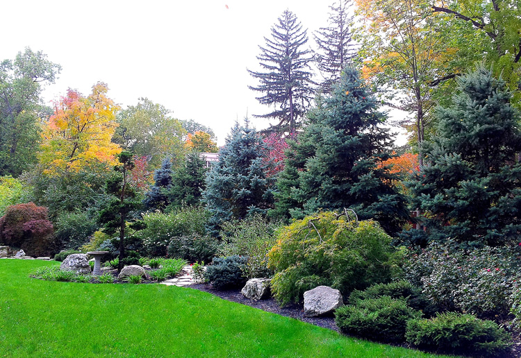 Landscaping Evergreen Trees For Privacy : Privacy planting