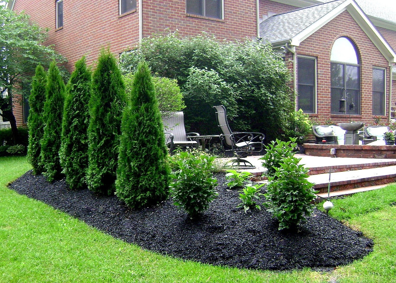 Privacy planting for Landscaping plants